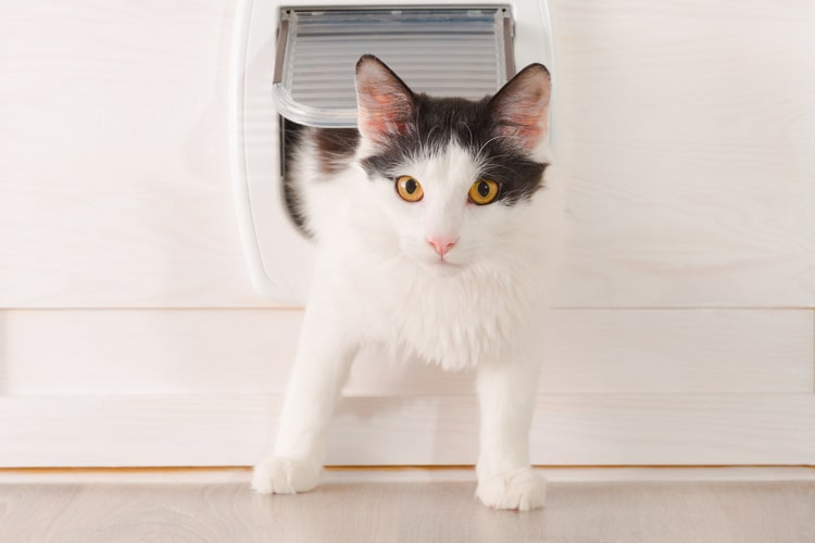 Installing Best Cat Door